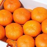 「贈答甘平5」贈答品 愛媛甘平(かんぺい)約5kg,せとかにも匹敵する柑橘 果物 フルーツ 柑橘 通販 贈答 ギフト