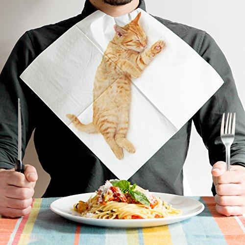かわゆい猫ちゃんたちがあなたの膝やお胸で丸まってくれるよ!