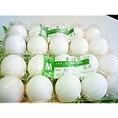 卵(たまご) 20玉セット [Qeg]