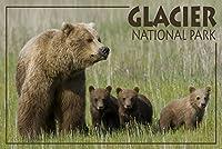 グレイシャー国立公園–Grizzly Bear andカブス 12 x 18 Art Print LANT-53487-12x18
