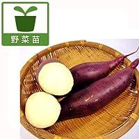 サツマイモ苗:べにはるか3号ポット6株セット[バイオ苗] ノーブランド品