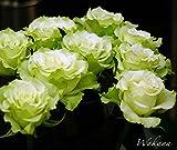バラ苗 ワカナ (HT) 【FG 白のかくれんぼ】国産苗 大苗 6号ポット 緑色 バラ 苗 四季咲き 木立ち 大輪 ハイブリッドティー 薔薇