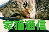 家猫通信10