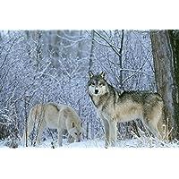 冬の動物の狼男 - #27885 - キャンバス印刷アートポスター 写真 部屋インテリア絵画 ポスター 90cmx60cm