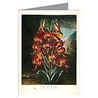 12ノートカードのロバート・ソーントンの医療からの図のSuperbリリーの花の植物の彼の–Temple Flora–Book on the SexualシステムのLinnaeus。