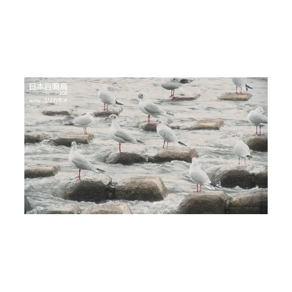 シンフォレストBlu-ray 日本百鳴鳥 2...の紹介画像30
