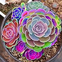Type1:100ピース種子多肉植物種子希少な多肉植物鉢植え植物ホームガーデンの装飾10タイプ