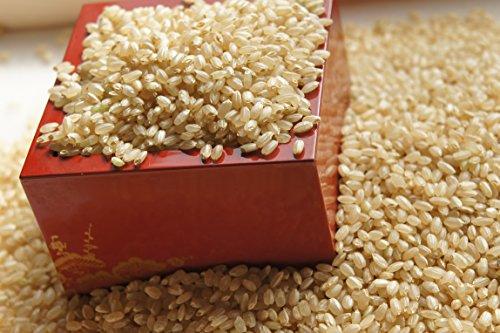 発芽玄米 全粒 5キロ (5キロ) 九州産 無洗米