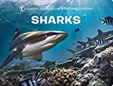 Sharks (Science for Toddlers) 画像