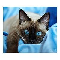 Demiawaking 5D 手作り ダイヤモンド絵画セット・猫ちゃん ラインストーン 貼れる ホームの装飾
