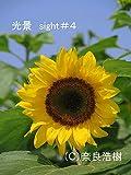 光景sight #4: 癒しを求めた花や風景の写真 (写真集)