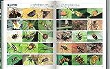 世界昆虫記 (写真記シリーズ) 画像