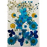 Face Flowers - Real Dried and Pressed Flowers for Face - Festival Makeup Rave Accessories (Blue)