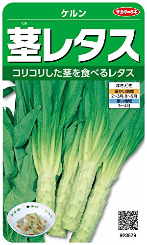 サカタのタネ 実咲野菜3579 茎レタス ケルン 00923579