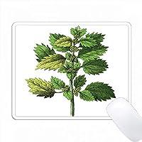 ドイツのヴィンテージ植物図書のハーブの印刷 PC Mouse Pad パソコン マウスパッド