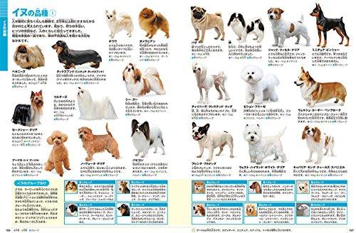 小学館『小学館の図鑑NEO[新版]動物』