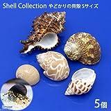 (海水魚 貝殻)やどかりの貝殻 Sサイズ おまかせ(殻口10~20mm)(5個入り)(形状おまかせ) 本州・四国限定[生体]