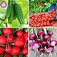種子パッケージ: 野菜seeds.400pcs&トマト&&オニオンseeds.Healthy野菜食品植物種子(混合売却大きい割引の4種類