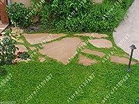 200本のヘルニアリアグラブラグラス - グリーンカーペット - グラウンドカバー、盆栽の植物貧しい土と砂利で生育