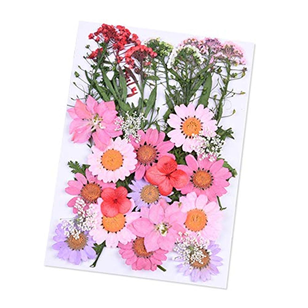 クッション誰も教育者Dried Flowers,ZOZOE Natural Real Dried Flowers Flower Kit Flower Petals and Buds DIY Silicone Coaster Resin Molds...