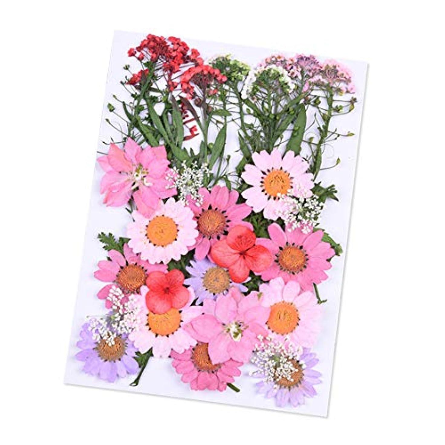 レパートリー自然公園管理するDried Flowers,ZOZOE Natural Real Dried Flowers Flower Kit Flower Petals and Buds DIY Silicone Coaster Resin Molds...
