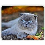 (目のマウスパッド)高品質のマウスパッド、猫の青い目の顔の秋の葉の嘘、ゲームオフィスのマウスパッド
