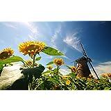 自然、ヒマワリ、葉、風車、青空 キャンバスの 写真 ポスター 印刷 旅行 風景 景色 (60cmx40cm)