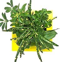 ミドリエデザイン 土を使わない 壁掛け 観葉植物 FRAMEイエロー18T2