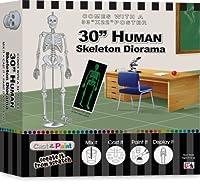 Skullduggery Human Skeleton Diorama Casting Kit [並行輸入品]