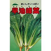 葉菜類 種 早池峰菜 小袋(約2ml)