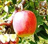 サンふじりんご 約40玉10kg