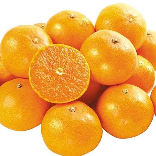 みかん せとか 2.5kg 愛媛産 ご家庭用 柑橘 柑橘の大トロ 国華園