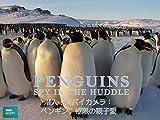 潜入!スパイカメラ~ペンギン 極限の親子愛 (字幕版)