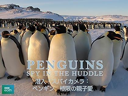 潜入!スパイカメラ〜ペンギン 極限の親子愛 (字幕版)