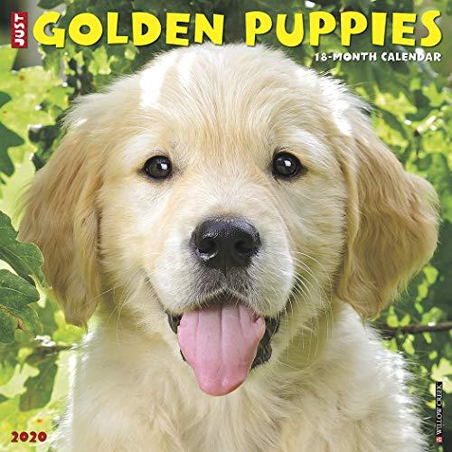 Just Golden Puppies 2020 Calendar