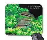 アピストグラマ・エリザベサエの3連フィンスプレッディングのマウスパッド:フォトパッド( 世界の熱帯魚シリーズ )