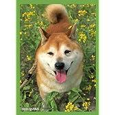 ブロッコリー ハイブリッドスリーブ 「菜の花と柴犬」