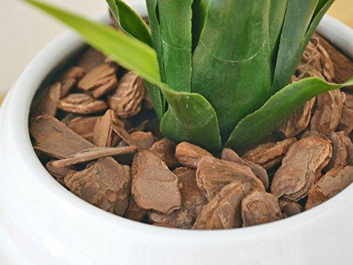 人工観葉植物 グズマニア ボール形陶器鉢 光触媒加工