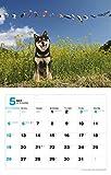 2019カレンダー 日本犬 ([カレンダー]) 画像