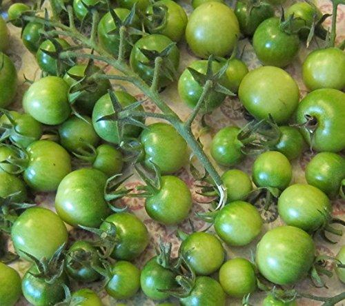 緑チェリー ミニトマト  6粒