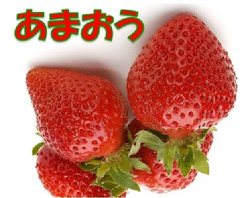 福岡県産 あまおう 1箱:2パック入り いちご イチゴ