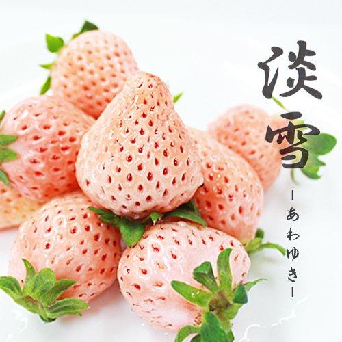【 熊本県産 】 淡雪 白イチゴ いちご 桜色 苺 秀品 贈答 景品 御祝 (2パック( 400g強 ))