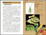 身近な昆虫のふしぎ 小さいカラダにつまっている生きていくための知恵と工夫とは!? (サイエンス・アイ新書) 画像