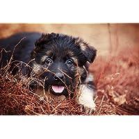 小さな黒い子犬の動物 - #48868 - キャンバス印刷アートポスター 写真 部屋インテリア絵画 ポスター 90cmx60cm