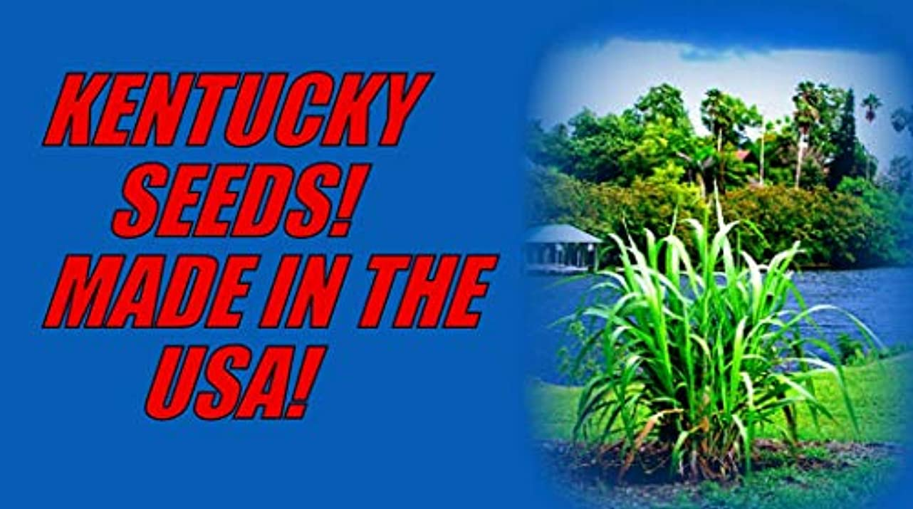 換気する乱れ尊厳アメリカでKENTUCKY FREE SHIP/FROM @ 300 SUGAR CANE/ORGANIC SEED ~