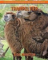 Trampeltier: Tolle Bilder & Wissenswertes ueber Tiere in der Natur