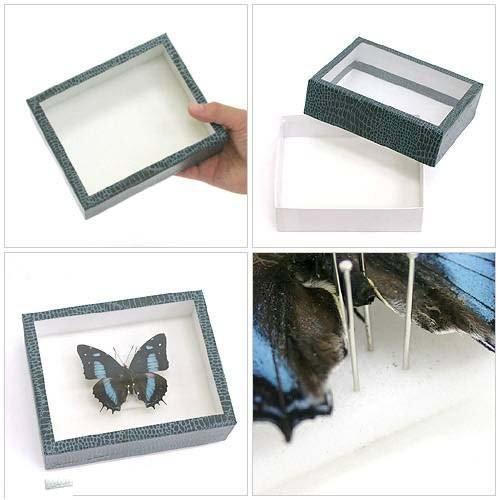 標本作成セット ~大型チョウ~ 昆虫 標本用品 標本セット
