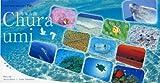 2010うみまーる卓上カレンダー'ちゅら海'
