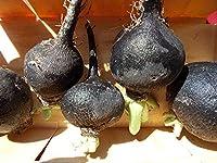PLATのFIRM:、スペインラウンド、400、非GMO、種子