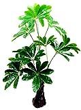 My Vision 観葉植物 造花 リアルプラント11 大型 人工 部屋 リアル 会社 緑 おしゃれ インテリア フェイクグリーン MV-QX-E11-60